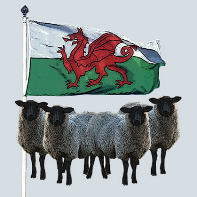 Welsh Flag and Sheep Greeting Card